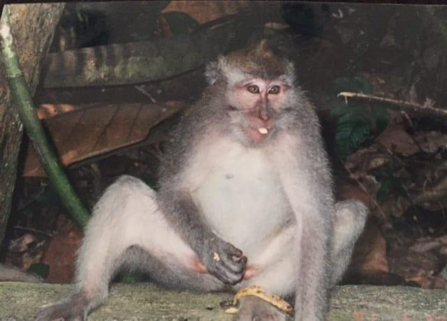 Bali Monkey Forest
